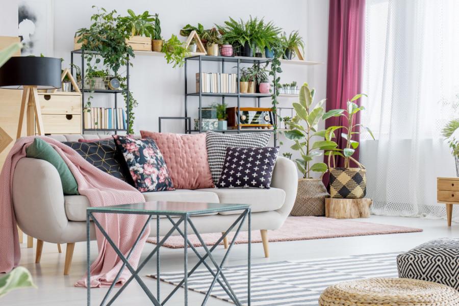 TOP saveti za adekvatan odabir cveća koji će oplemeniti vaš dom i uneti TALAS POZITIVNE ENERGIJE!