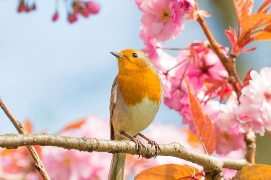 Dnevni horoskop za 28. mart: Uživajte u prirodi i njenim mirisima, osluškujte cvrkut ptica